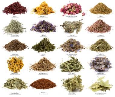 Ημερίδα για τα αρωματικά – φαρμακευτικά φυτά στο Αγρίνιο