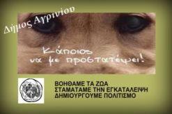 Εκδήλωση για τα αδέσποτα ζώα