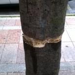 Τα έβαλαν με τα δέντρα και τα φυτά (2)