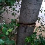 Τα έβαλαν με τα δέντρα και τα φυτά (3)